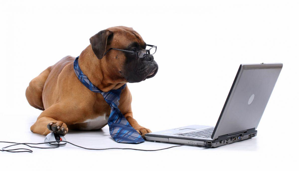 Hund framför datorn